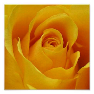 Big Yellow Rose Posters