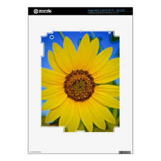 Big Yellow Sunflower Decal For iPad 3