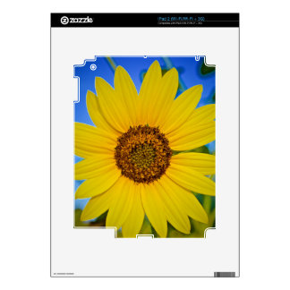 Big Yellow Sunflower iPad 2 Skins