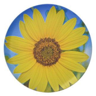 Big Yellow Sunflower Plate