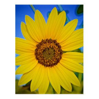 Big Yellow Sunflower Postcard