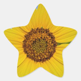 Big Yellow Sunflower Star Sticker