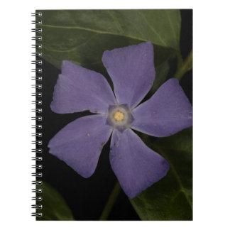 Bígaro Spiral Notebooks