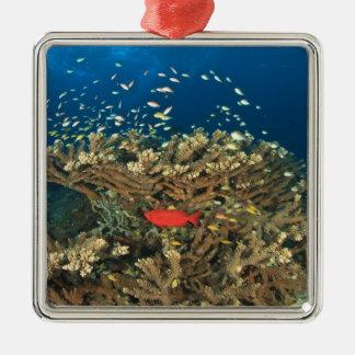 Bigeye hiding under hard coral, Kadola Island, Metal Ornament
