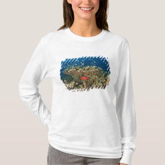Bigeye hiding under hard coral, Kadola Island, T-Shirt
