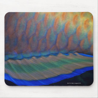 Bigeye Priacanthus hamrur, close-up of fin Mousepads
