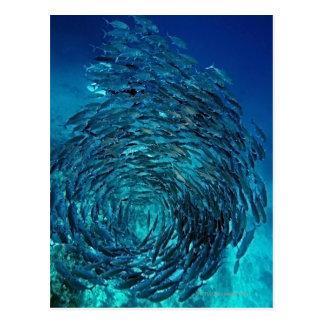 Bigeye trevally (Caranx sexfasciatus), swimming Postcard