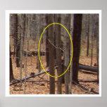 Bigfoot detrás de árboles impresiones