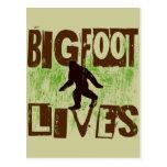 Bigfoot Lives Postcards