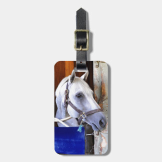 Bigger is Bettor Bag Tag