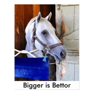 Bigger is Bettor Postcard