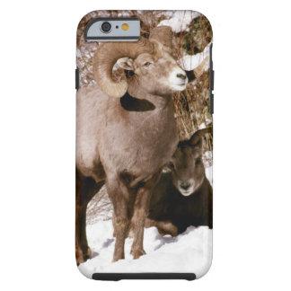 Bighorn ram and ewe tough iPhone 6 case