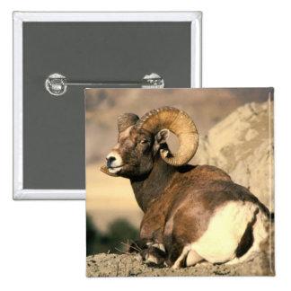 Bighorn Ram Pinback Button