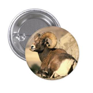 Bighorn Ram Buttons