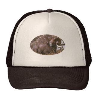 Bighorn ram trucker hat