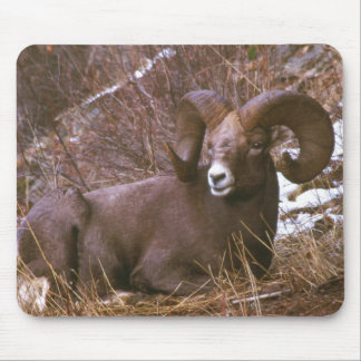 Bighorn Ram Mouse Pad