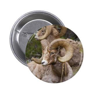 Bighorn Sheep Buttons
