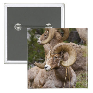 Bighorn Sheep Pin