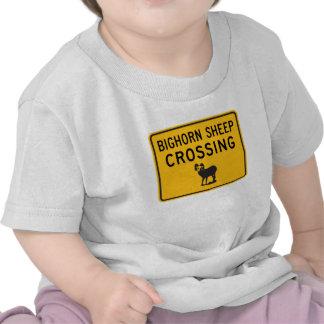 Bighorn Sheep Crossing, Washington, USA T-shirts