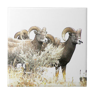 Bighorn Sheep Ewes in BC Canada Tile