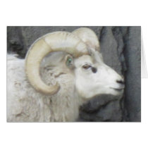 Bighorn Sheep Father's Day Card