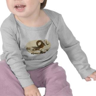 Bighorn Sheep in Light Tee Shirt