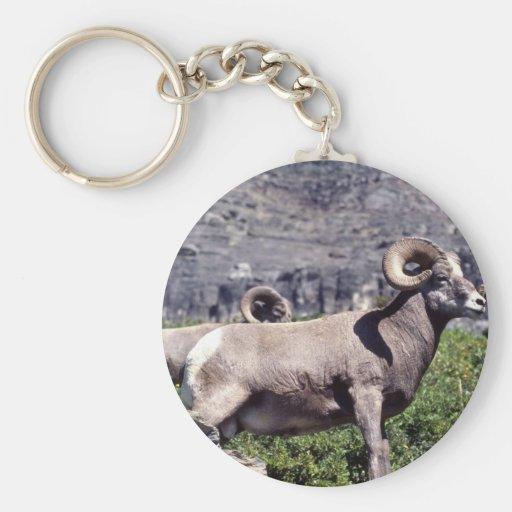 Bighorn sheep (Large ram) Basic Round Button Keychain
