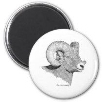 Bighorn Sheep Magnet