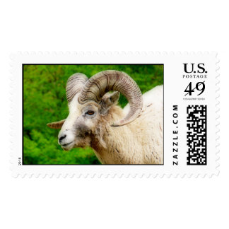 Bighorn Sheep - Male with Big Horns Postage