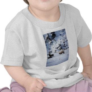 Bighorn sheep (Mating behaviour) Tee Shirts
