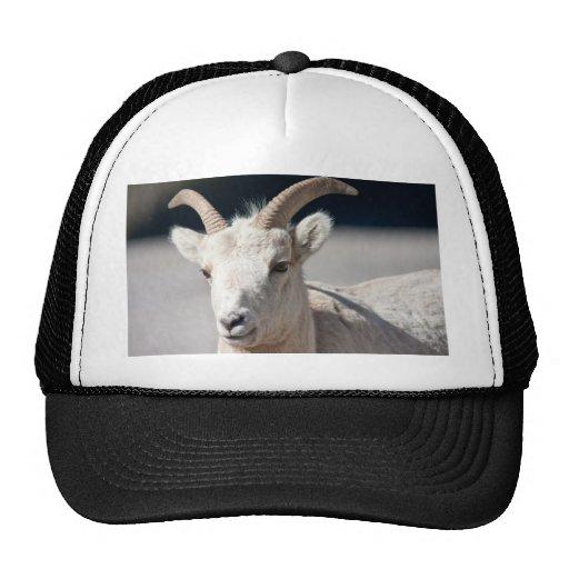 Bighorn sheep mesh hats