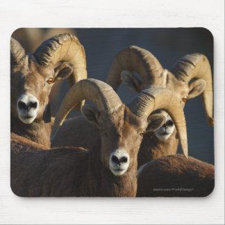 Bighorn Sheep Mouse Pad