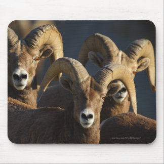 Bighorn Sheep Mouse Pad