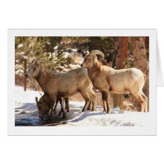 Bighorn Sheep notecard Stationery Note Card