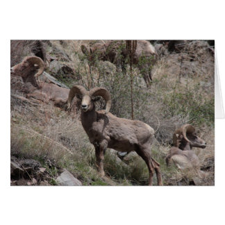 Bighorn Sheep notecards Stationery Note Card