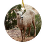 Bighorn Sheep Ornament