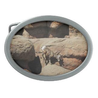 Bighorn Sheep Oval Belt Buckle