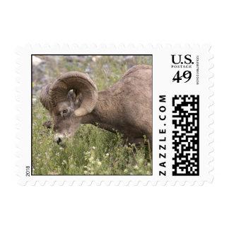 Bighorn Sheep Postage Stamps