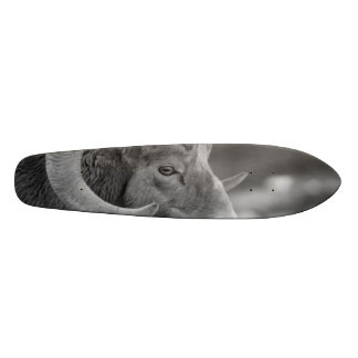 Bighorn Sheep Skate Boards