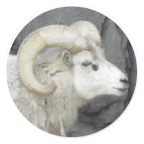 Bighorn Sheep Sticker