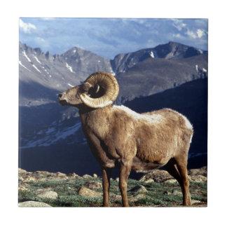 Bighorn Sheep Ceramic Tiles