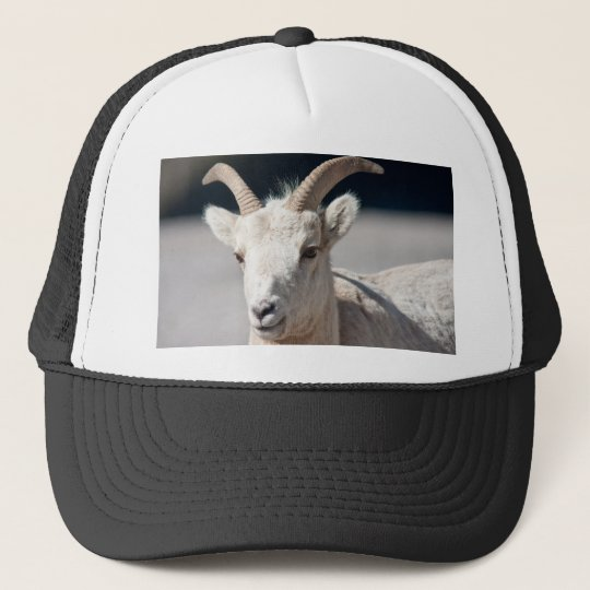 Bighorn sheep trucker hat