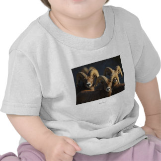Bighorn Sheep T Shirts