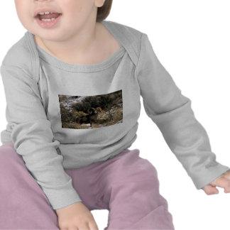 Bighorn sheep tee shirts
