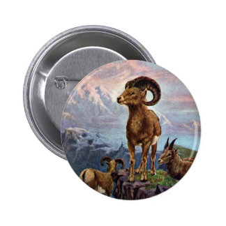 Bighorn Sheep Vintage Illustration Button