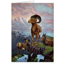 Bighorn Sheep Vintage Illustration Card