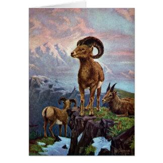 Bighorn Sheep Vintage Illustration Greeting Cards