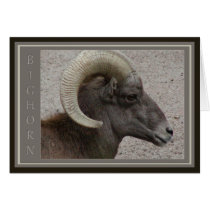 Bighorn Sheep Wildlife Card