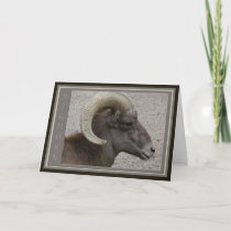 Bighorn Sheep Wildlife Thank You Card