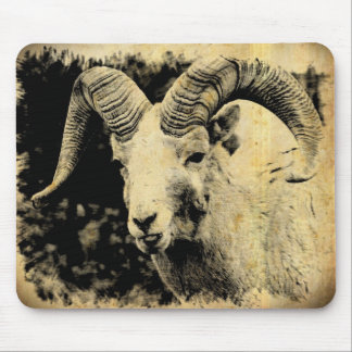Bighorn Sheep with Attitude Mouse Pads